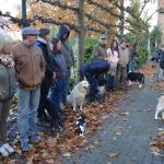 2016-11-06 Hondenwijding, Kapellen